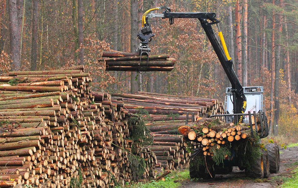 Timber Production Cleaner
